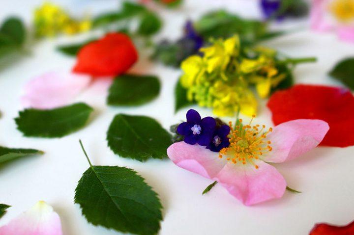 Fleurs-Bach