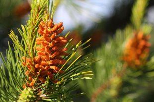 Pine-Pin-Culpabilité